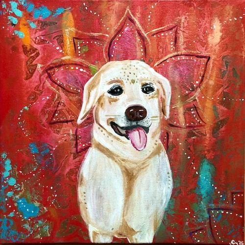 Hund Tierkommunikation Tierportrait